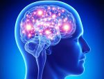 promotional product facts brain